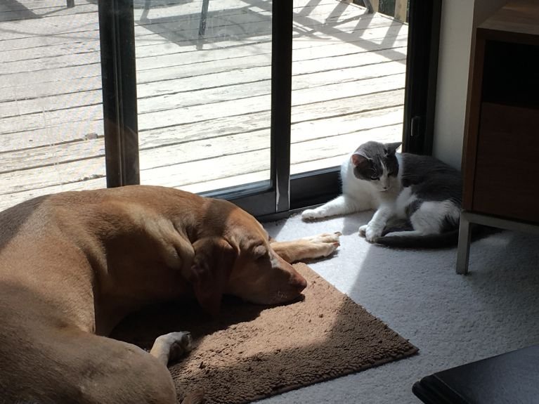 Hank and Lulu in the most sought after sun spot in the house